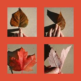 Leaf Symmetry